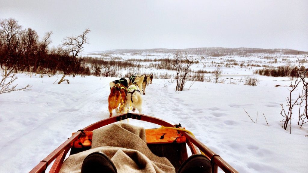 Norway to Finland Dog Sledge
